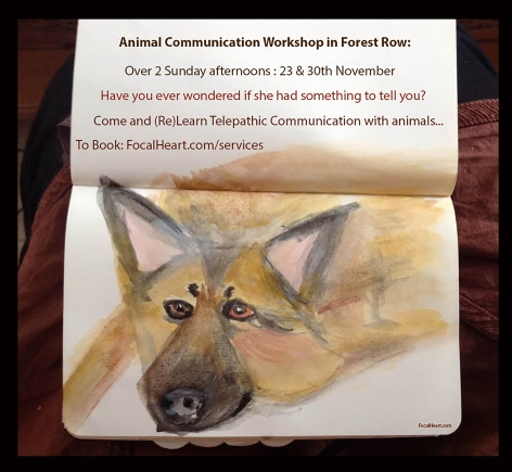 FocalHeart Leaflet Dog 3