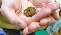 """Frog said: """"Humans need to help the wild animals and the wildlife, we need it! Help the wildlife in your garden or in your area. Don't assume that wild animals would rather be left to take care of themselves, this is no longer the case. Things are beyond that now and in order to survive a lot of wild animals need a bit of support... so feed the wild animals who live around you, build a pond in your garden to support us... Humans have caused a lot of damage on wildlife and now we need humans help to undo what they've done. It's important for our survival. More and more wild animals go close to human habitats to see if they can find help or just scavenge some food. We are on the decline, our habitats are fragile and we need help. Thank you for washing me and taking such good care of me."""""""