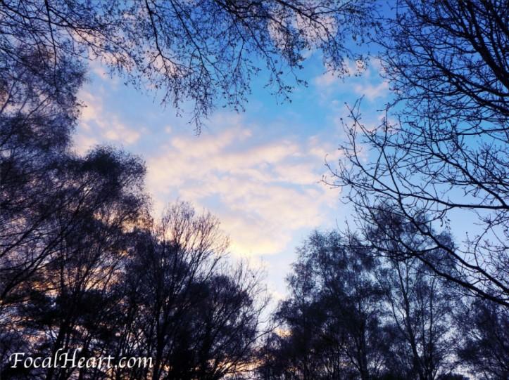 cropped-focalheart2.jpg