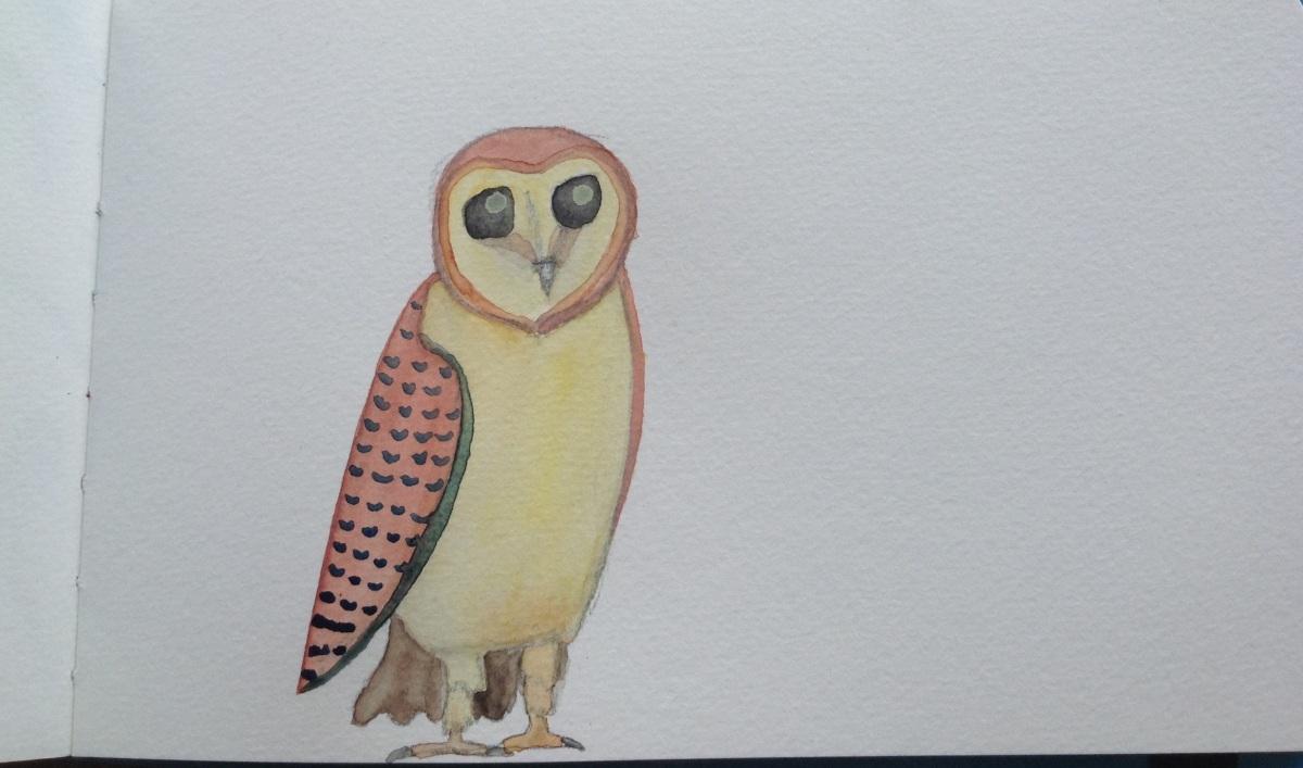 Barn owl (TytoAlba)