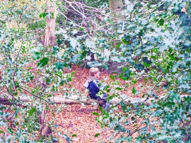 Boy in the wood