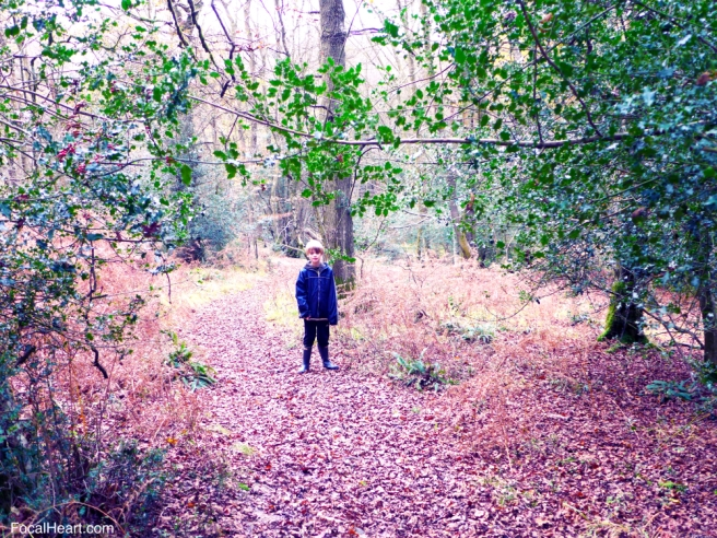 Boy in the woods2