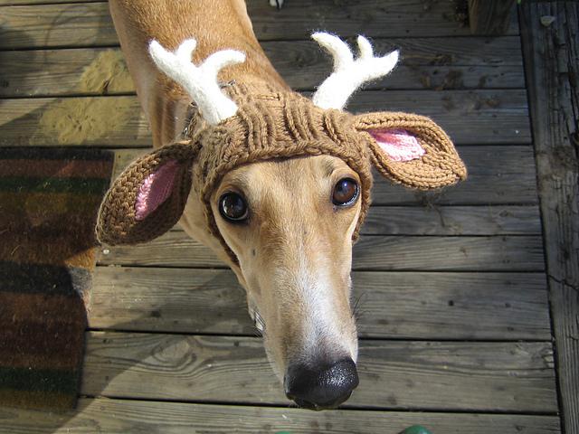 greyhound antlers