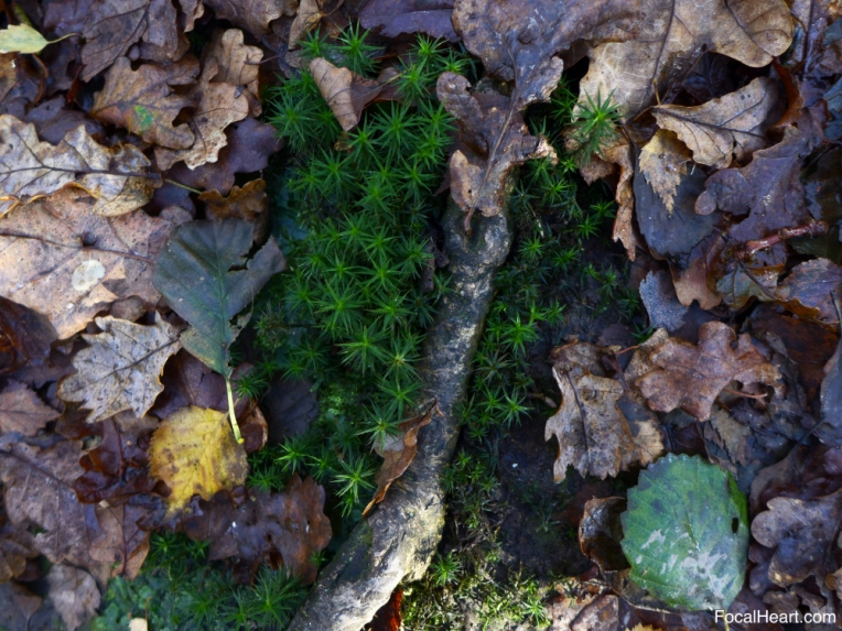 Leaves Moss Stick