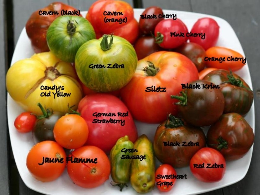 heirloom-tomatoes-from-market-with-names-a5