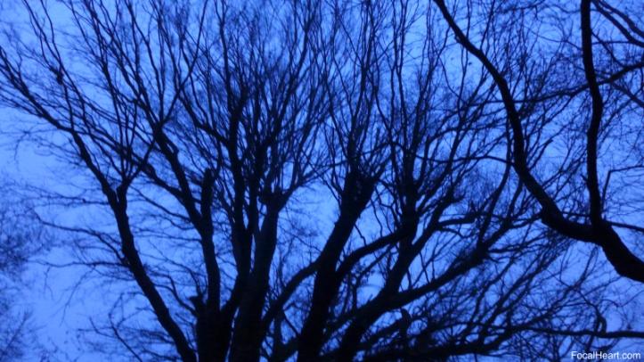 Sunrise trees1