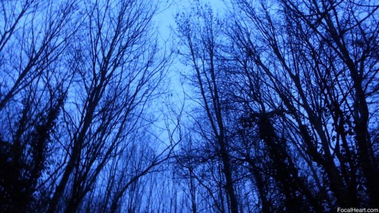 Sunrise Trees2