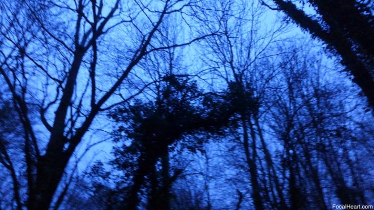 Sunrise Trees4
