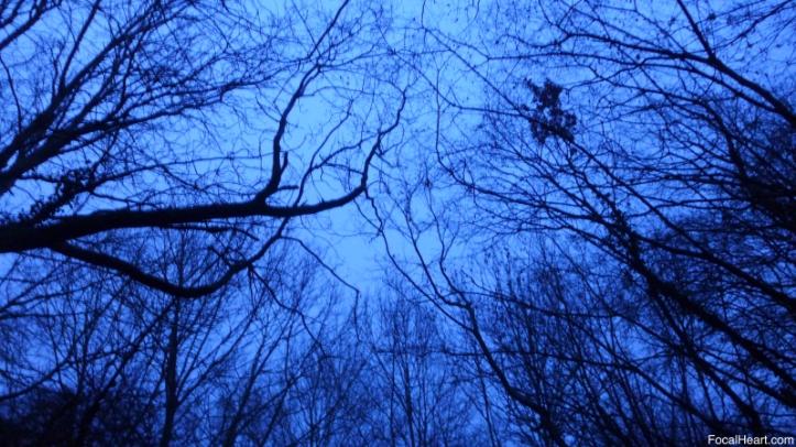 Sunrise Trees5