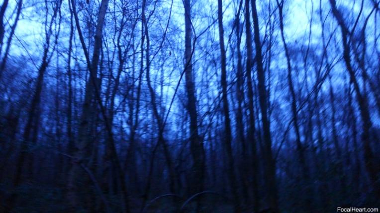 Sunrise Trees6
