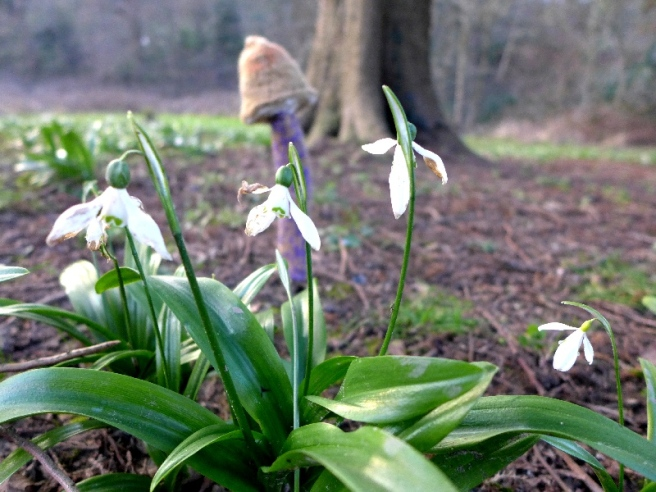 Mushroom and snow drops 2