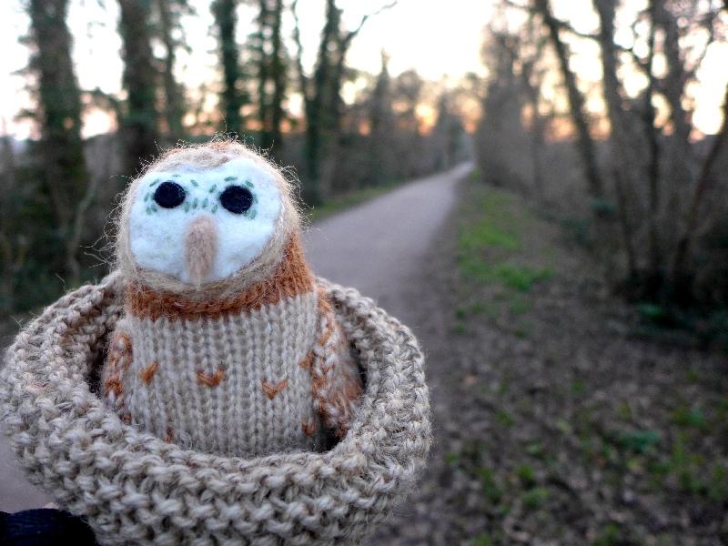 Owl in sunset