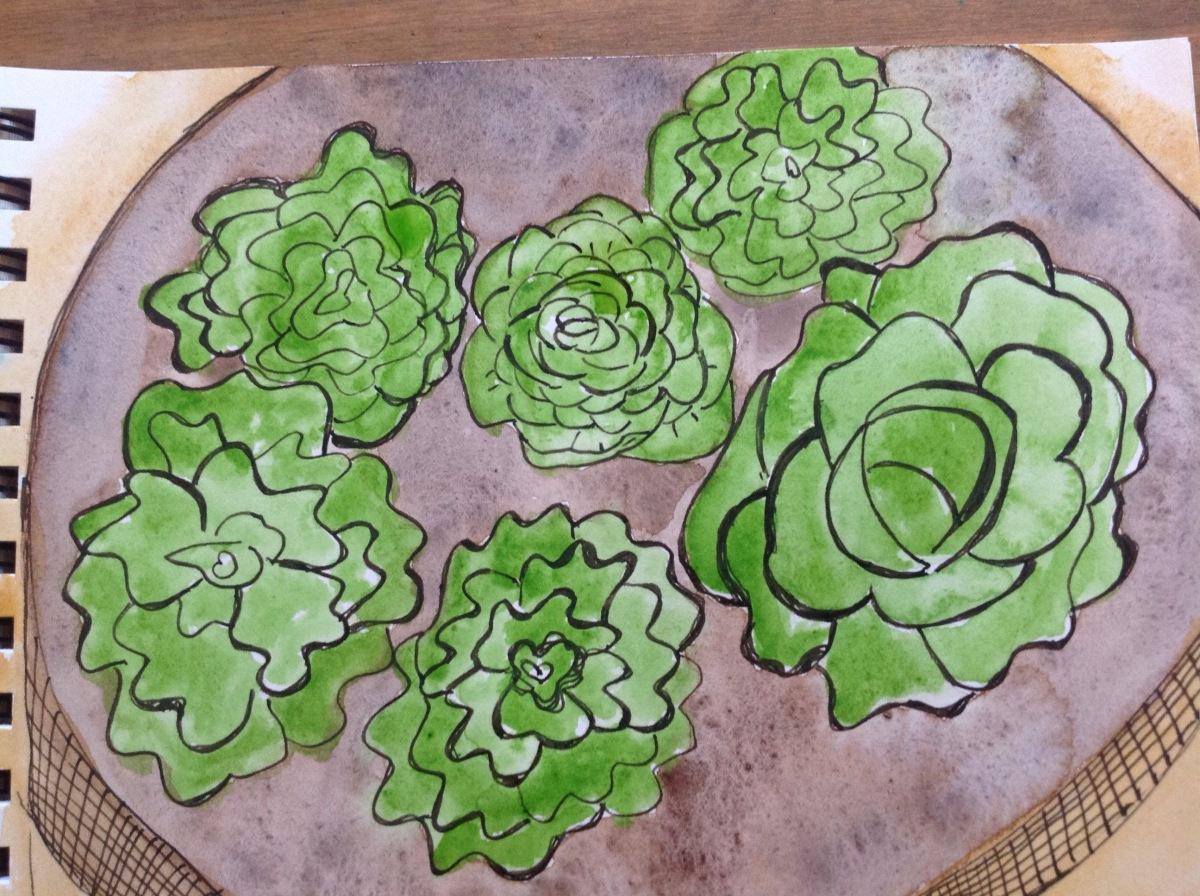 Wet lettuces