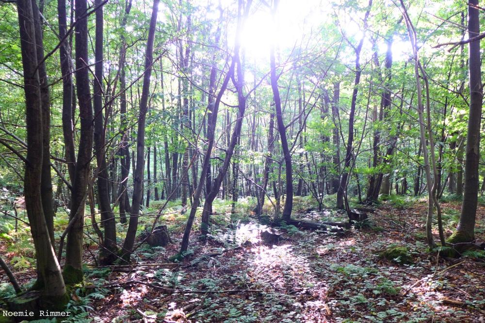 wildwoods1