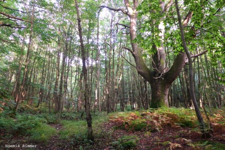 wildwoods2