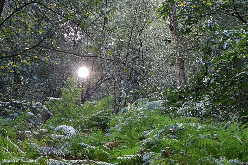 wildwoods4