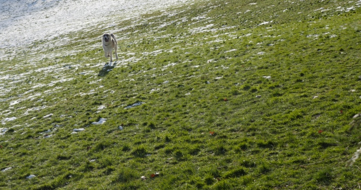 Pawt Snow