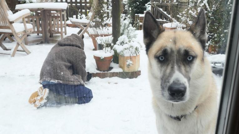 Thom+Pawt snow