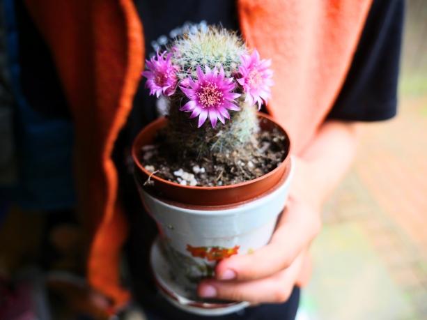cactusFlowers1