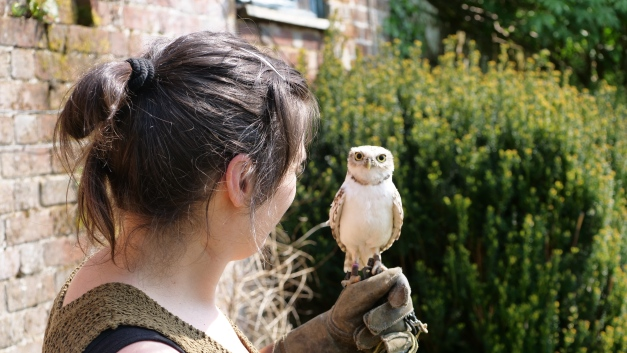 Noemie+Borrowingowl3