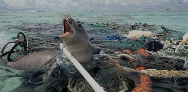seal ocean pollution