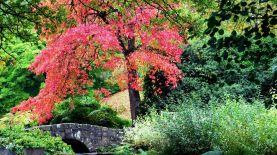 Bridge+Tree