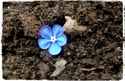 Blue flower_Fotor
