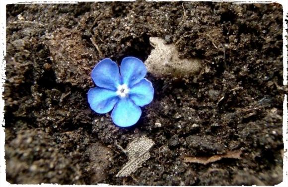 Blue flower_Fotor