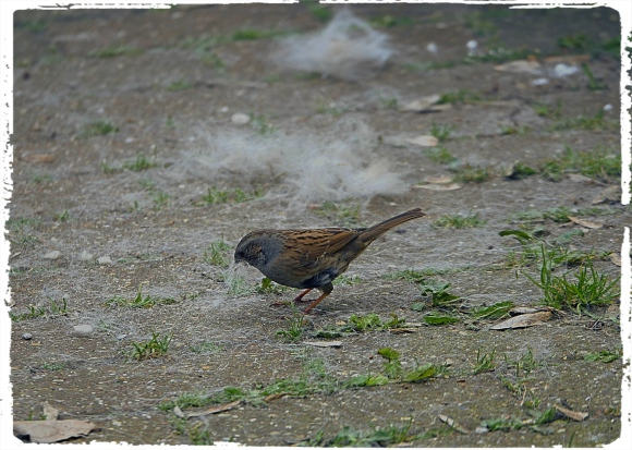Bird Fluff_Fotor.jpg