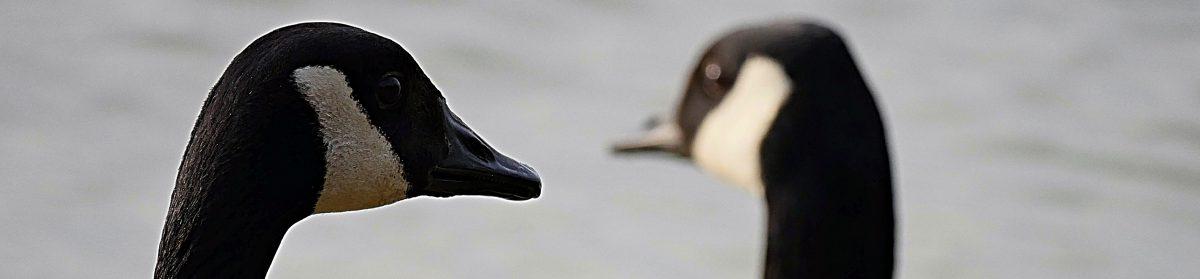 Interspecies Communication